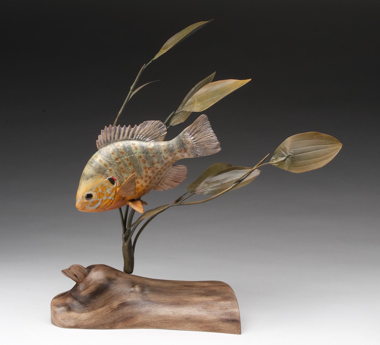 PCC2017- 3rd Best of Show Novice - Norbert Dupas pumpkinseed fish