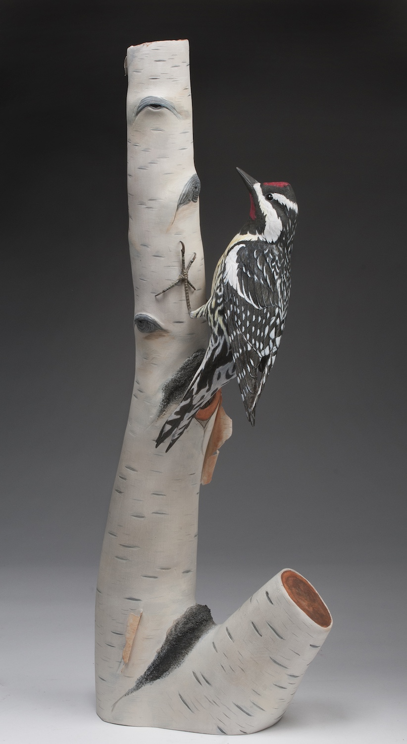 2018 Open 1st Best of Show - Austin Eade yellow-bellied sapsucker