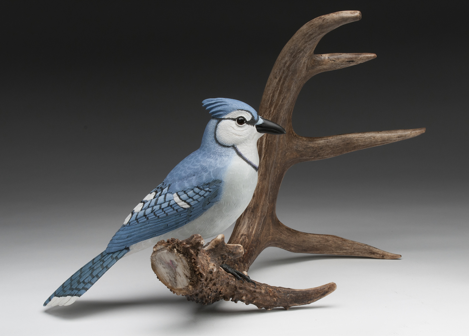 Novice 2nd Best of Show- BlueJay on Antler - Jerry Unrau